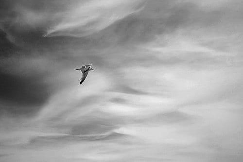 Cape Cod 2012 (Explore #492)